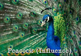 influence-peacock-profile