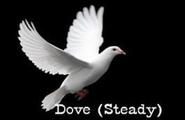 steady-dove-profile